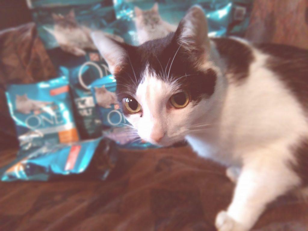kociarze-wszystko-co-najlepsze-dla-twojego-kota-purinaone